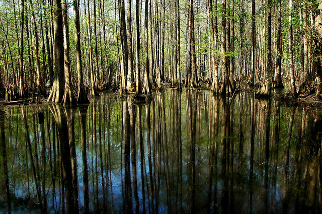 1000 images about swamp on pinterest alligator hunting