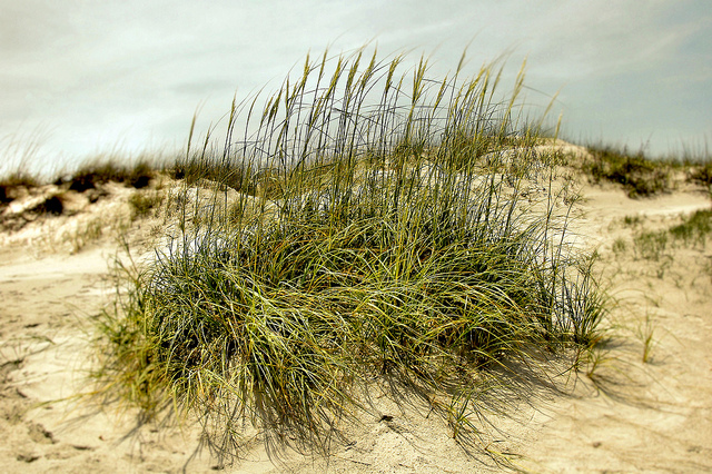 South Dunes Picnic Area Jekyll Island Ga