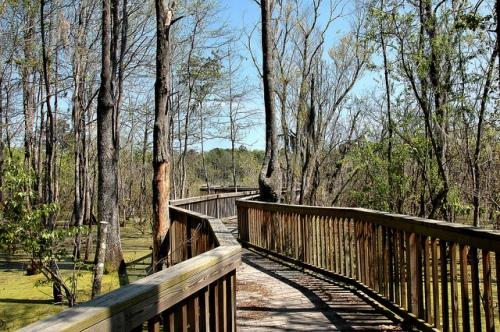 liberty-county-ga-colonels-island-barrier-lake-pamona-road-nature-area-boardwalk-wetland-duckweed-picture-image-photo-copyright-brian-brown-photographer-vanishing-coastal-georgia-usa-20