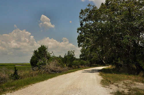 Shell Road to Light House Sapelo Island GA Picture Image Photograph © Brian Brown Vanishing Coastal Georgia USA 2013