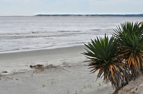 Glory Beach Jekyll Island GA Looking Toward Cumberland Island Sea Turtle Nesting Habitat Protected Sand Dunes South End Picture Image Photograph © Copyright Brian Brown Vanishing Coastal Georgia USA 2013