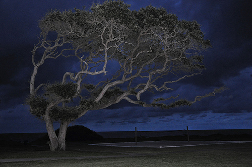 Jekyll Island GA Oak Tree Effects of Coastal Wind Erosion Windworn Stunted Growth Picture Image Photograph Copyright © Brian Brown Vanishing Coastal Georgia USA 2013