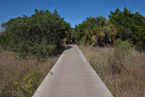 Cockspur Island Savannah River GA Palms Tidal Hammock Trail to Lighthouse Atlantic Tidal Forest Picture Image Photograph Copyright © Brian Brown Vanishing Coastal Georgia USA 2013