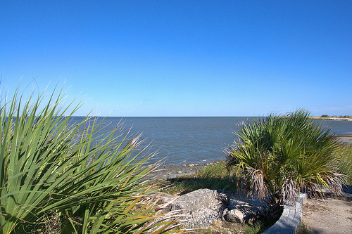 Mouth of the Savannah River at Cockspur Island GA Palmettos Picture Image Photograph Copyright © Brian Brown Vanishing Coastal Georgia USA 2013