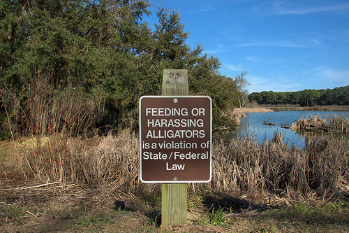 Federal State Alligator Protection Sign no feeding or harassing Photograph harris neck national wildlife refuge mcintosh county ga photograph copyright brian brown vanishing coastal georgia usa 2014