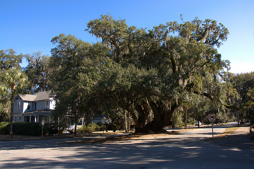 Lovers Oak Corner of Prince Albany Streets Brunswick GA Photograph Copyright Bian Brown Vanishing Coastal Georgia USA 2014