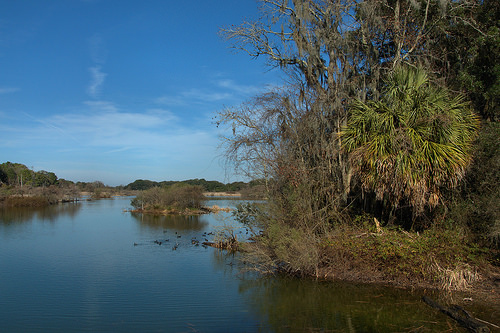 Woody Pond Habitat with Palm Tree Harris Neck NWR McIntosh County GA Photograph Copyright Brian Brown Vanishing Coastal Georgia USA 2014