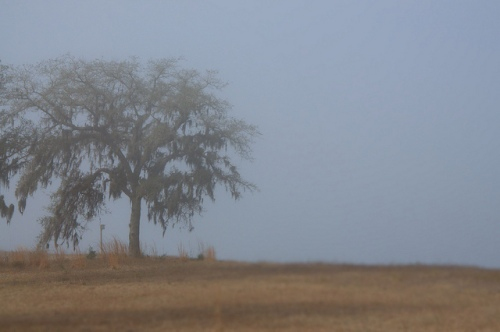 Oak in Fog on Cliffs of Crooked River Surreal Magical Photograph Copyright Brian Brown Vanishing Coastal Georgia USA 2014
