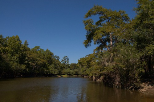 Fort Barrington Park Altamaha River Oxbow Lake McIntosh County GA Photograph Copyright Brian Brown Vanishing Coastal Georgia USA 2014