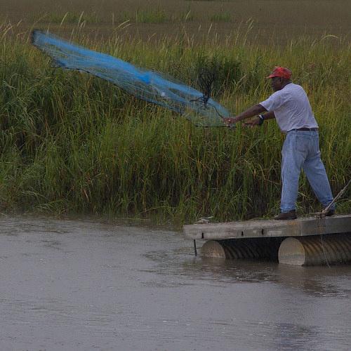 Cast Net Shrimping, Sapelo Island | Vanishing Coastal