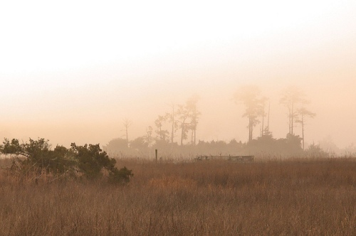 Black Island Creek GA McIntosh County Fog Marsh Photograph Copyright Brian Brown Vanishing Coastal Georgia USA 2015