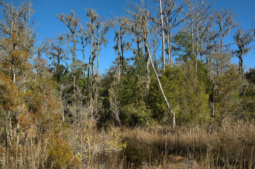 Cay Creek Brackish Marsh Intertidal Swamp Wetland Liberty County GA Photograph Copyright Brian Brown Vanishing Coastal Georgia USA 2015