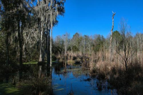 Cay Creek Freshwater Wetlands Liberty County GA Photograph Copyright Brian Brown Vanishing Coastal Georgia USA 2015