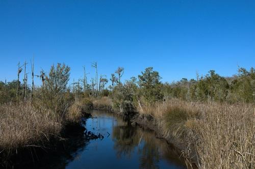 Cay Creek Liberty County GA Protected Wetland Intertidal Zone Photograph Copyright Brian Brown Vanishing Coastal Georgia USA 2015