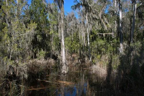 Cay Creek Liberty County GA Wetlands Photograph Copyright Brian Brown Vanishing Coastal Georgia USA 2015