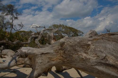 Driftwood Beach Jekyll Island GA Photograph Copyright Brian Brown Vanishing Coastal Georgia USA 2015