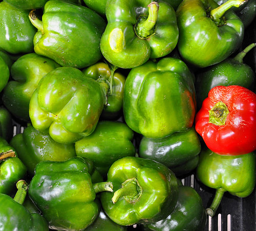 Forsyth Farmers Market Savannah GA Organic Bell Peppers Photograph Copyright Brian Brown Vanishing Coastal Georgia USA 2015