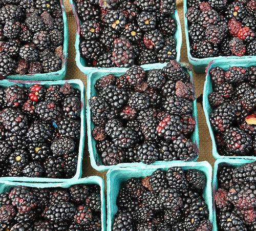 Forsyth Farmers Market Savannah GA Organic Blackberries Photograph Copyright Brian Brown Vanishing Coastal Georgia USA 2015