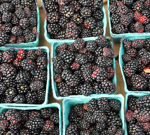 Forsyth Farmers Market Savannah GA Organic Blackberries Photograph Copyright Brian Brown Vanishing Coastal Georgia USA 2015