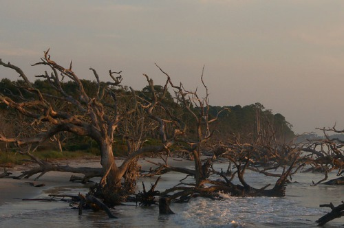 Driftwood Beach Jekyll Island GA Boneyard High Tide Photograph Copyright Brian Brown Vanishing Coastal Georgia USA 2015