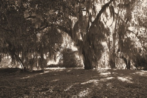 Altama Plantation Glynn County GA Backyard of Lodge Photograph Copyright Brian Brown Vanishing Coastal Georgia USA 2016