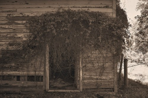 Altama Plantation Glynn County GA Garage Photograph Copyright Brian Brown Vanishing Coastal Georgia USA 2016
