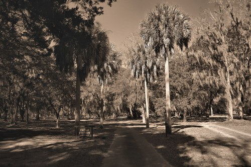 Altama Plantation Glynn County GA Palm Lined Drive Photograph Copyright Brian Brown Vanshing Coastal Georgia USA 2016